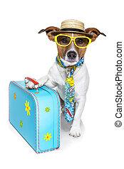 perro, turista, vacaciones