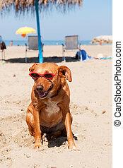 perro, vacaciones