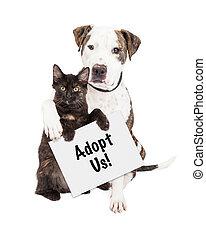 perro, y, gatito, adoptar, nosotros, señal