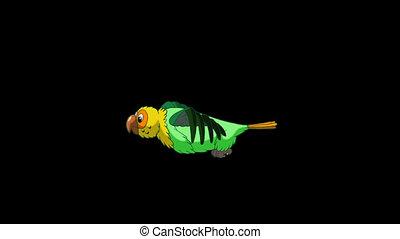 perroquet, classique, fait main, channel., animation, vert, alpha, flies.