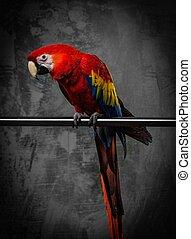 perroquet, coloré, séance, perche