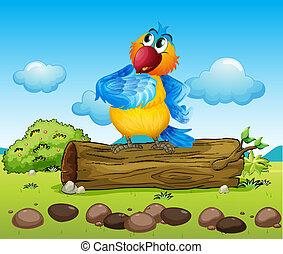 perroquet, coloré