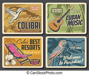 perroquet, mariposa, cubaine, guitare, paume, royal, carte