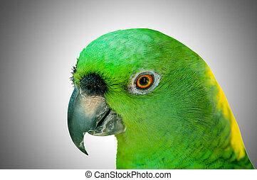 perroquet, séance, oiseau, perche, coloré
