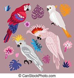 perroquets, 1
