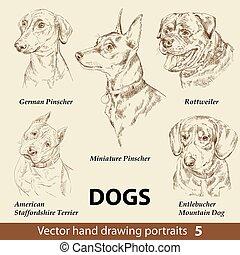 perros, dibujo, conjunto de mano, 5