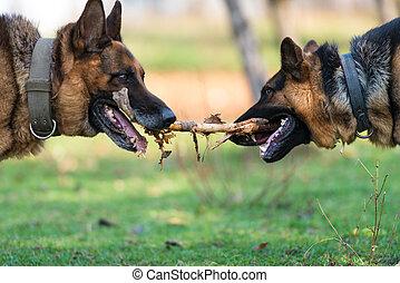 perros, dos, palo, uno