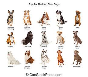 perros, popular, tamaño, colección, medio