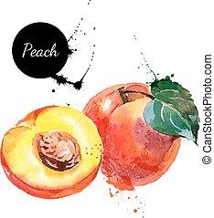 persika, hand, vattenfärg, bakgrund, oavgjord, vit, målning