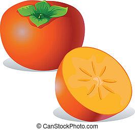 persimmon - vector illustration