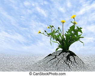 Persist and Succeed - Symbol for so many things in life....