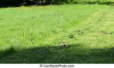 person grass lawn mower - Person walk along lawn mower on...