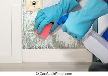 Person Hand Cleaning Moldy Wall - Close-up Of A Person Hand...