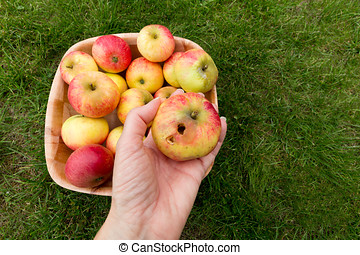 Person holding a rotten apple