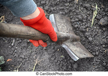 Person in red garden gloves digging with a shovel