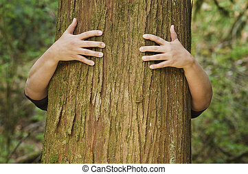 person, omfamningar, a, träd