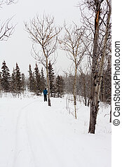 Person on croos-country skis - Cross-country skiing person...