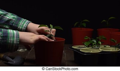 Person puts soil into brown pot with a seedling in it with ...