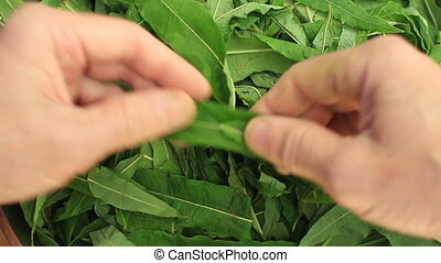 person sort out green tea leaves, first person view, loop