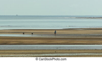 Person walking on the beach with two dogs - Wide shot of a...