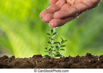 persona, mano, regar, a, pequeño, planta