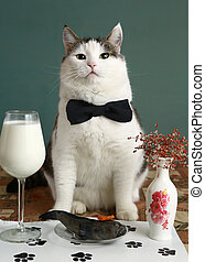persona, muy, restaurante, gato, mascota, importante