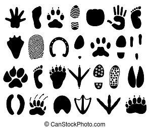 persona, vector, huellas, ilustración, animals.