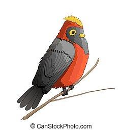 personagem, caricatura, ilustração, pássaro