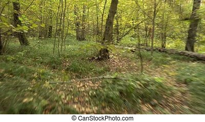 Personal perspective of running on a path at the forest.