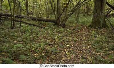Personal perspective of walking on a path at the forest.