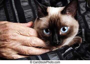 personne agee, à, chat