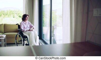 personne agee, fauteuil roulant, intérieur, regarder dehors, femme, fenêtre., solitaire, maison