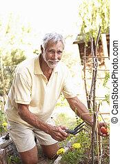 personne agee, jardin, délassant, homme