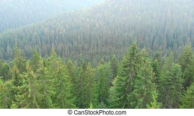 perspective, carpathian, montagnes, forêt dense, arbre vert, aérien