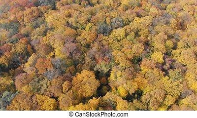 perspective, feuilles, jaune, brun, aérien, automne