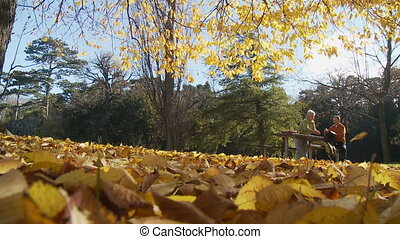 perspective foliage senior couple on bench
