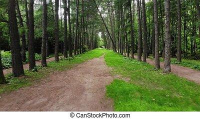 perspective, marche, forêt, personnel, sentier