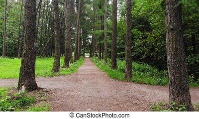 perspective, personnel, marche, sentier, forêt