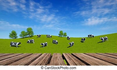 Perspective wood table and cows graze on meadow