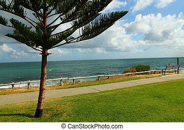 perth, araucaria, australia, árbol