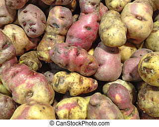 peruaan, aardappel