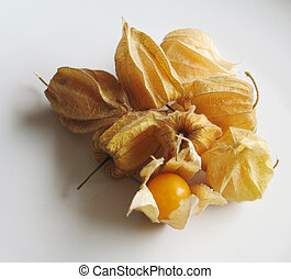 peruano, fruta, aguaymanto