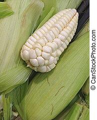peruano, maíz, maduro