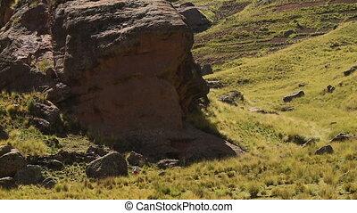 Peruvian Woman Herding Livestock, Andes, Peru - High angle...