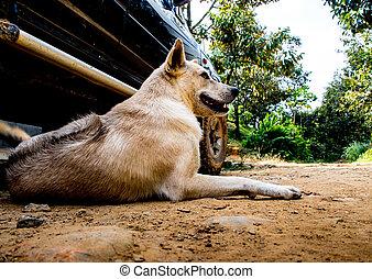 pes, ležící, dále, pozemek, blízký, ta, pickup kára