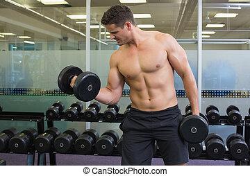 pesado, dumbbells, shirtless, bodybuilder, determinado,...
