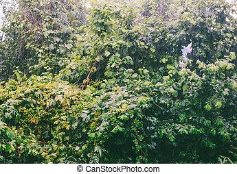pesado, primavera, folhas, chuva, manhã, fundo, molhados