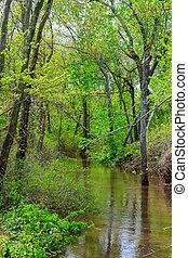 pesado, troncos, antigas, inundado, mostrando, após, árvore, chuva, muito, vale