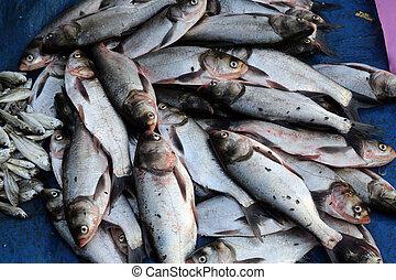 pescadería, en, kumrokhali, india
