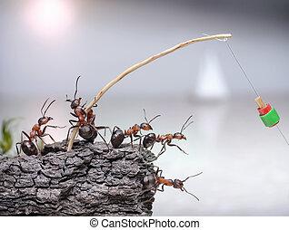 pescadores, mar, hormigas, trabajo en equipo, pesca, equipo
